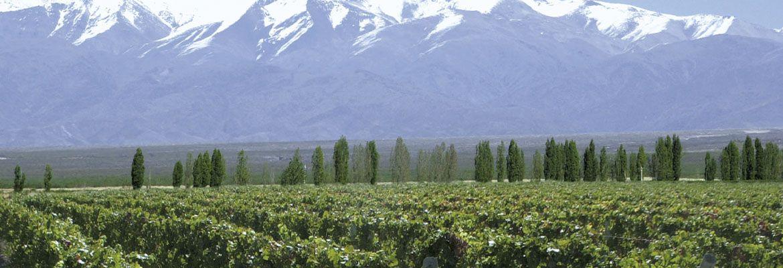 Foto Valle de Uco, vinos, gastronomía y naturaleza