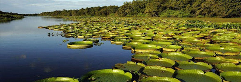 Foto  Aventura en Esteros del Iberá - Cabalgata Cruce del Estero