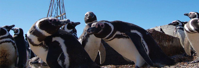 Foto Otra vista de Puerto Madryn