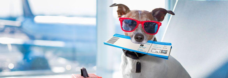 ¿Cómo viajar con Mascotas en avión?